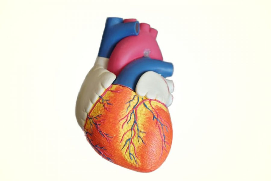 Developments in Heart Failure (III)