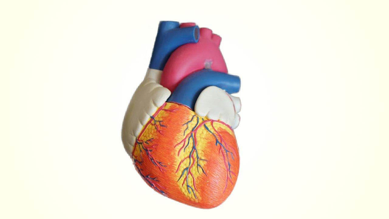 Developments in Heart Failure (V)